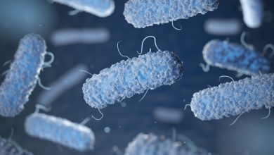 Photo of لیستریا مونوسیتوژنز: ویژگی ها، بیماری زایی و درمان