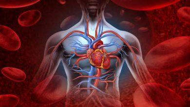 Photo of گردش خون در بدن دو سیستم ریوی و عمومی دارد